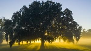 tree-1024x574